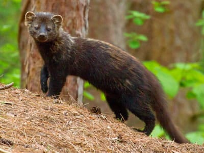 Photo courtesy of Mass Audubon.